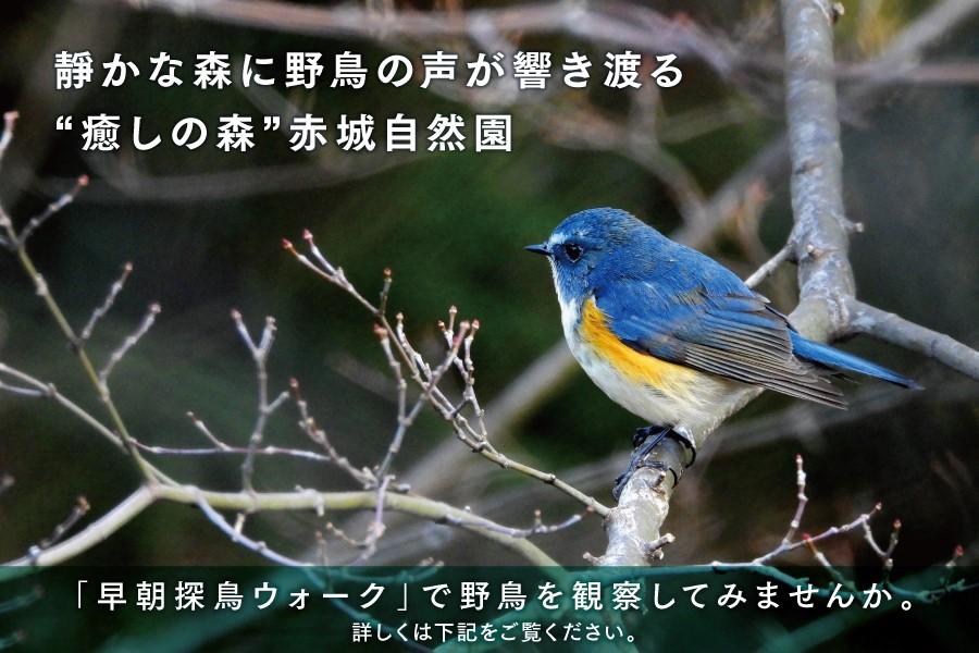 akagi-nature-park2020gpon_main900×600