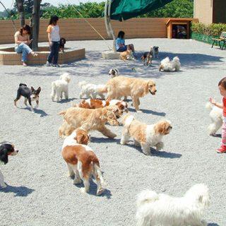 世界中のワンちゃんが集まるコミュニティーパーク【世界の名犬牧場】