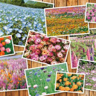 館林が誇る花の楽園新エリアあす公開!