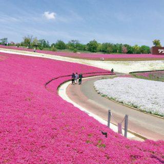 花々が織りなす大パノラマ!おおた芝桜・ポピーまつり【4月6日~ 5月7日】